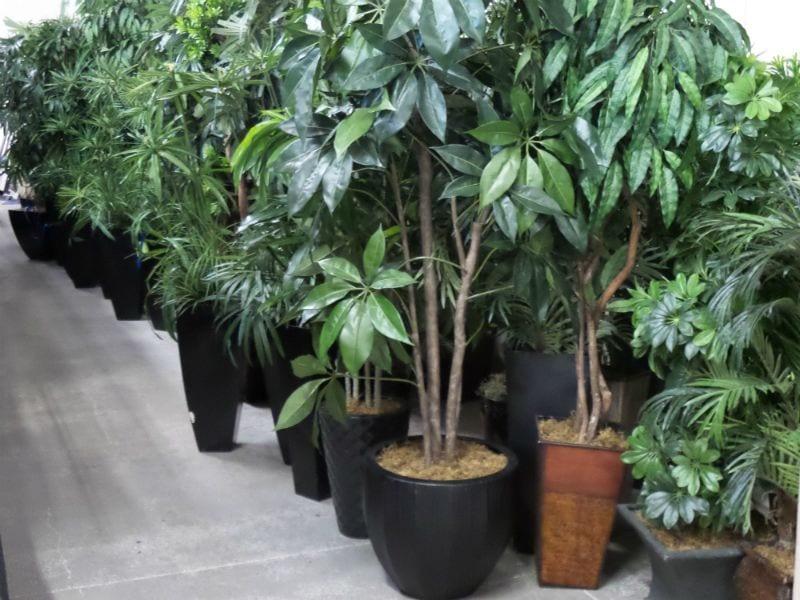 Fake Silk Trees